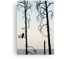 Bald Eagle-Signed-3072 Canvas Print