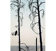 Bald Eagle-Signed-3072 Photographic Print