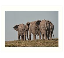 African Elephant – Loxodonta African Heading Home Art Print