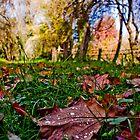 Morning Maple Dew by Jane Keats