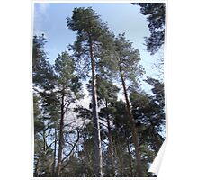 Tall Trees Poster