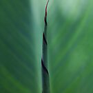 Nature love art. (Canna plant&#x27;s leaf) by Qnita