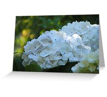 Bright in shade Greeting Card