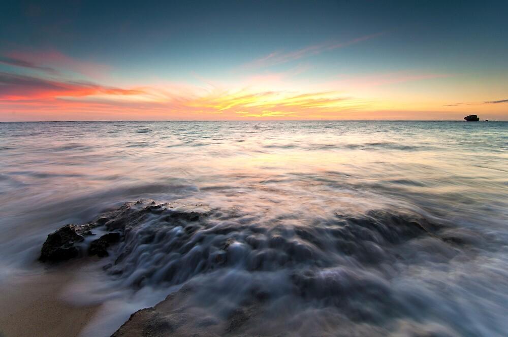 Ocean Life by Glen  Robinson