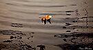 Floating by Pene Stevens