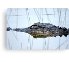 Alligator in the Everglades Canvas Print