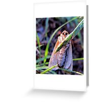 Hanging In There -  Daily Homework - Day 4 - May 10, 2012 Greeting Card