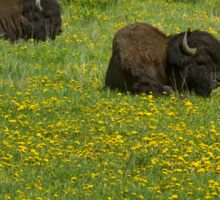 Buffalo And Mountain Dandelions-Signed-9752 Sticker