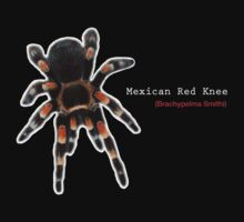 Mexican Red Knee Tarantula by Transcendence