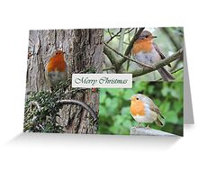 Robin Trio Greeting Card