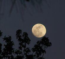 Carolina Super Moon by Lisa Taylor