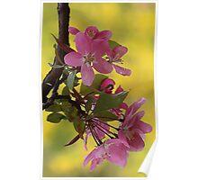 -Apple Blossoms (Forsythia Background) Poster