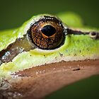 Frog's Eye by toby snelgrove  IPA