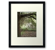 An Adventure Draped in Trees of Green Framed Print