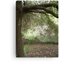 An Adventure Draped in Trees of Green Canvas Print