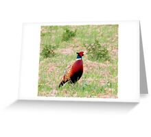 Looking For A Mate Greeting Card