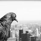Birds Eye View by Lyndsey O'Connell