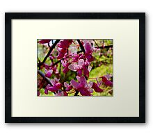 Flowers in the Park III Framed Print
