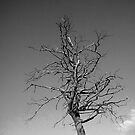 Ghost tree by impossiblesong