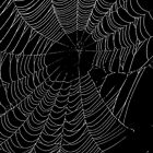 SpiderWeb by XxJasonMichaelx