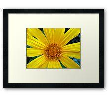 Wild, Yellow Daisy Framed Print