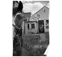 Inner city horse Poster