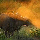 My babe and I by Explorations Africa Dan MacKenzie