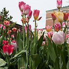 Tulips 2 by Jory Authement