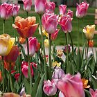 Tulips 3 by Jory Authement
