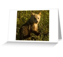 Grizzly Cub-Signed-3744 Greeting Card