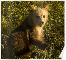 Grizzly Cub-Signed-3744 Poster