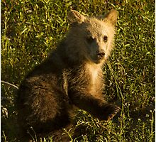 Grizzly Cub-Signed-3744 Photographic Print