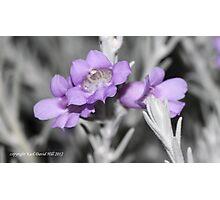 macro flora 023 Photographic Print