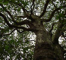 Tree#1 by Rod Craig