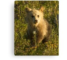 Grizzly Cub-Signed-3966 Canvas Print
