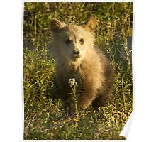 Grizzly Cub-Signed-3966 Poster