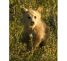 Grizzly Cub-Signed-3966 Photographic Print