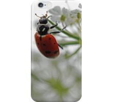 Ladybug Enjoying Wildflower iPhone Case/Skin