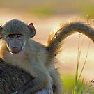 Hangin with mom by Explorations Africa Dan MacKenzie
