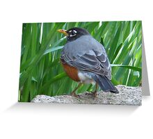 Coming home to roost Greeting Card