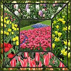 Bold and Beautiful - Keukenhof Tulips Collage by MidnightMelody