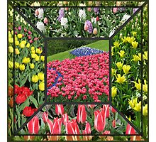 Bold and Beautiful - Keukenhof Tulips Collage Photographic Print