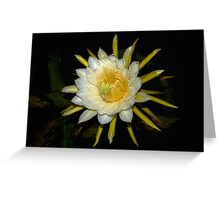 Night Blooming Cereus On Kaua'i Greeting Card