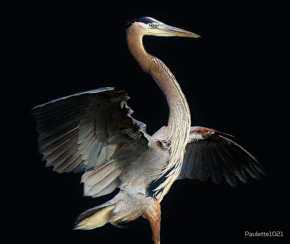 Beautiful Blue Heron by Paulette1021