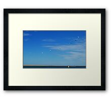 Gulls on the move Framed Print