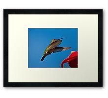 Humming Bird Landing Framed Print