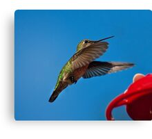 Humming Bird Landing Canvas Print