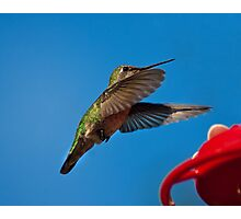 Humming Bird Landing Photographic Print