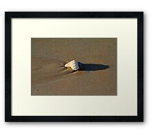 Shell on a beach Framed Print