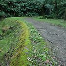O'Shannassy Aqueduct Trail by Timo Balk